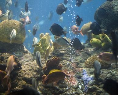 Filtres DIY Aquarium