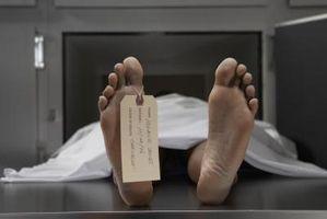 Quels événements conduisent à Rigor Mortis après la mort?