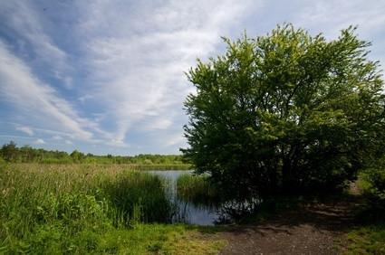 Les effets des pluies acides sur les algues des étangs