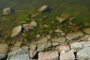Comment cultiver des algues Verticalement pour carburant