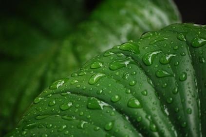 Quelle est la fonction principale des feuilles des plantes?