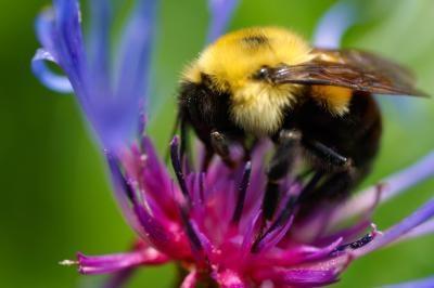 Qu'est-ce que les abeilles font Nids dans les arbres?
