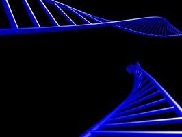 ARN Vs. ADN Structure