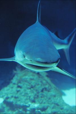 Les effets de requins sur la vie humaine