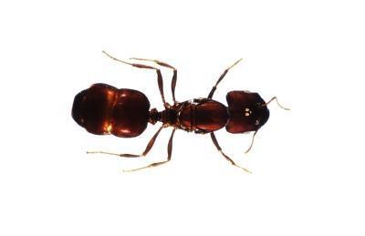 Que les choses sont dans un habitat de fourmi?