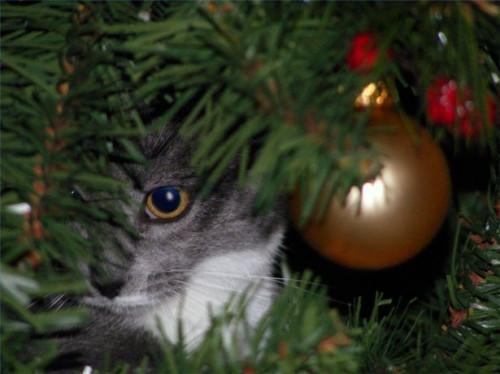 Comment Cat Preuve de votre arbre de Noël