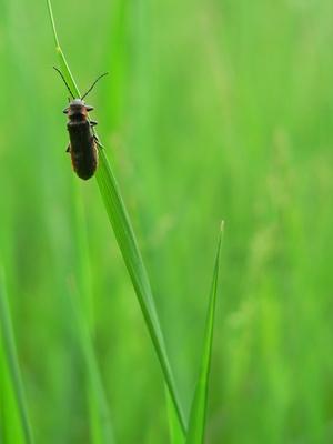 Comment faire pour attirer la foudre Bugs