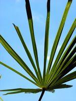 Palm utilisations de la Direction générale