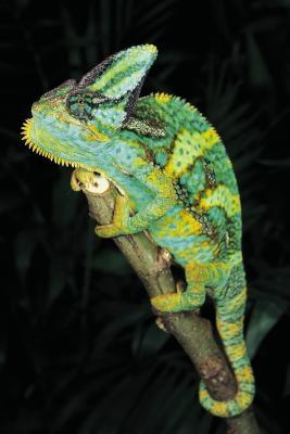 Reptile qui utilise Camouflage