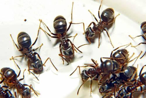Le cycle de vie des fourmis