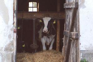 Conseils Dairy Game Dash