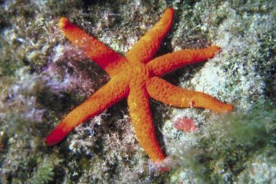 Comment puis-Starfish Déplacer?