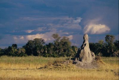 Variétés de Termites