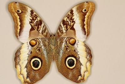 Comment monter Moths