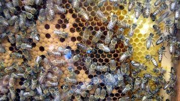 Comment séparer le miel de la cire Peigne