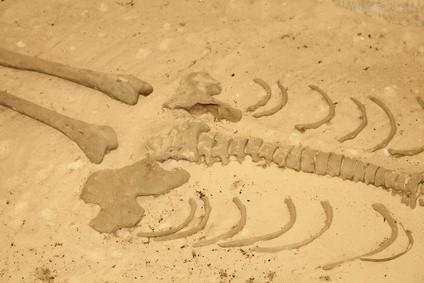 Comment savoir Remains Squelette humain