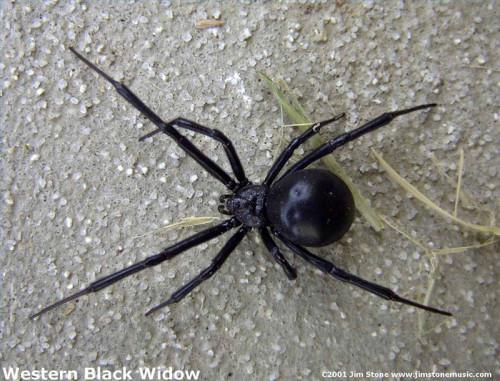 Comment identifier les araignées dans l'Utah
