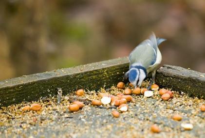 Comment nourrir les oiseaux sauvages dans le Nord