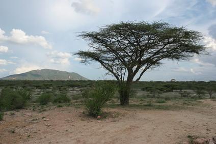 Plantes Arabie Saoudite Désert