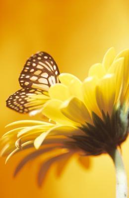 Qu'est-ce qui se passe quand vous touchez un papillon?