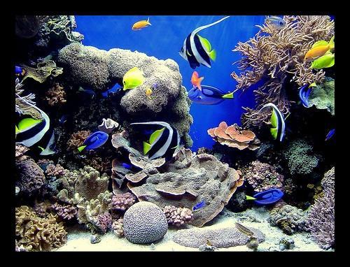 Quelles sont la mer Éponges utilisé?