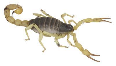 Altitude pour Scorpions dans le Colorado