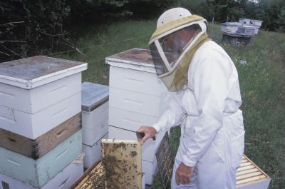 Comment faire pour démarrer une entreprise Beehive