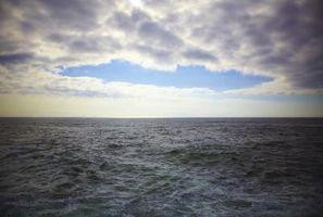 Quels sont les courants ascendants de riche en nutriments des eaux du fond de l'océan à la surface appelée?