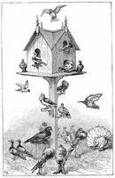 Expériences de pigeon
