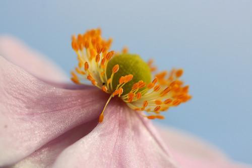 Les parties d'une fleur Brassica
