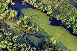 Comment faire de l'huile d'algues Out