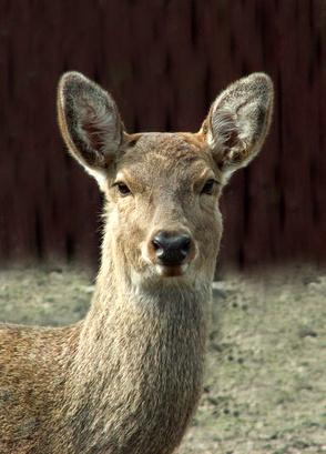 Les meilleures choses à nourrir Deer,