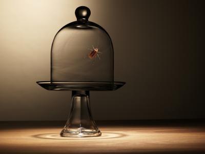 Comment faire une maison Roach-Free