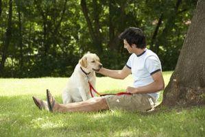 Est-ce un chien Aider un adolescent avec faible estime de soi?