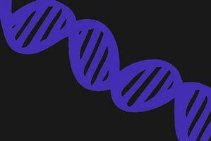 Qu'est-ce qu'un Chip Gene?