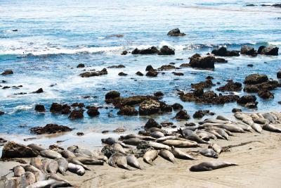 Information sur les phoques de Weddell