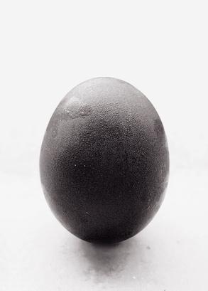 Instructions pour Carving Emu Eggs