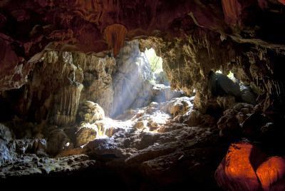 Les plantes qui vivent dans les grottes