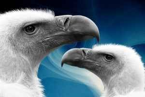 Quel genre de nourriture Ne Différents oiseaux mangent?