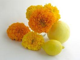 Comment Envoyer Fruit & Flowers