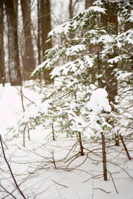 Jeux Trivia A propos de Winter & Snow