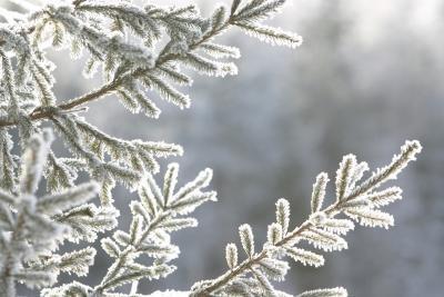 Enduits pour Arrangements floraux hiver