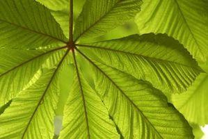 Qu'est-ce que les organismes réaliser la photosynthèse?
