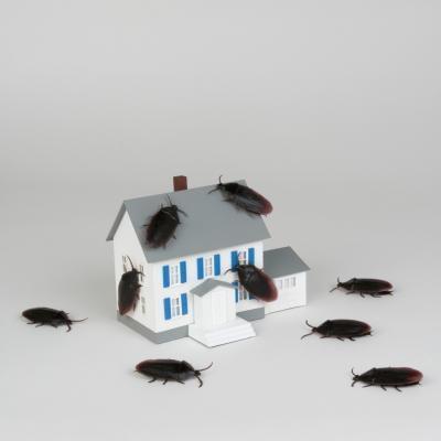 Comment tuer une colonie Roach