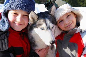 Les enfants et les morsures de chien du visage