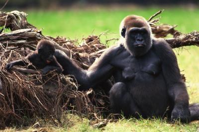 La durée de vie moyenne des mammifères