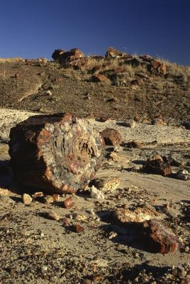 Quelles conditions sont les pires pour la formation Fossil?