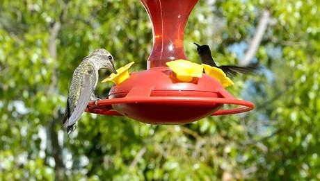 Comment faire Hummingbird alimentaire avec du sucre