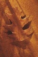 Comment faire feuilles de chêne pour un gâteau de mariage