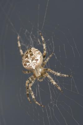 Comment savoir quel type de Spider Vous avez trouvé